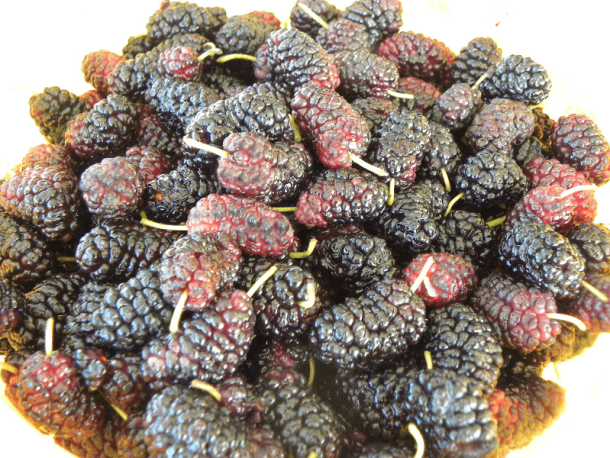 Black Mulberries image