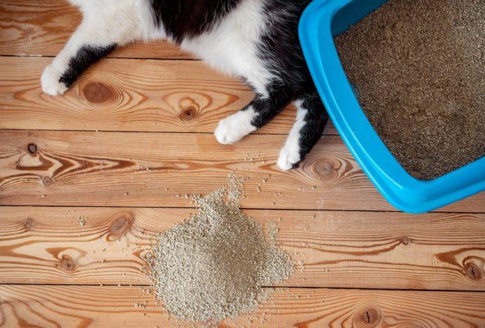 Pasir Kucing Murah Terbaik