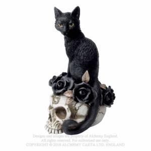 chat sur crâne