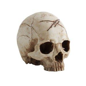 Crâne Blanc en Résine