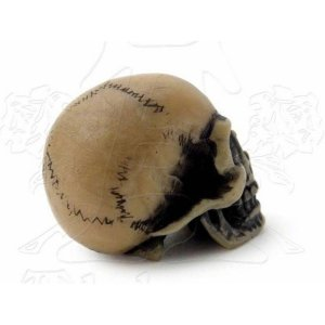 Mini Crâne Lapillus Worry