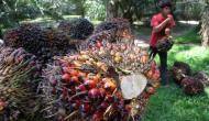 Permalink ke Diversifikasi Pasar Kelapa Sawit Mendesak Dilakukan