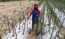 Permalink to Pengecoran Jalan Jauh Dari Pemukiman Penduduk, Satgas Nyetok Teh