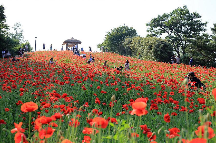 Printemps à Séoul - Olympic Park