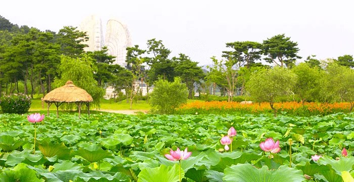 10-Buyeo-Seodong-Lotus-Festival
