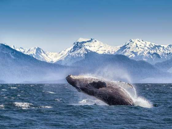 Luxury Kosher Cruises to Alaska 2021-2022
