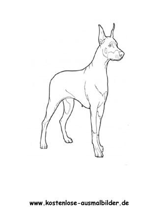 Ausmalbilder Dobermann Tiere Zum Ausmalen Malvorlagen