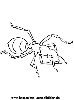Ausmalbilder Ameise 2 Tiere Zum Ausmalen Malvorlagen