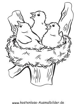 Ausmalbilder Vogelnest Tiere Zum Ausmalen Malvorlagen