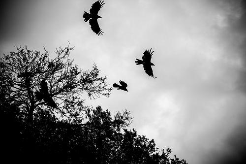 grey sky birds photo
