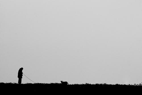 goat black and white photo