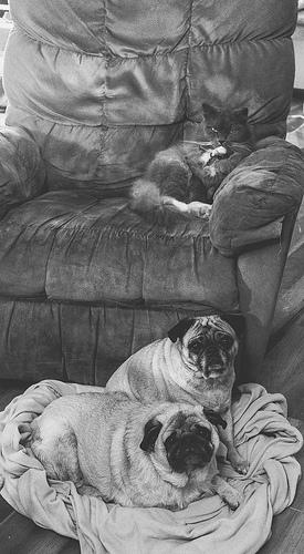 black and white dog funny photo
