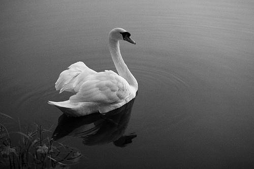 black and white bird photo