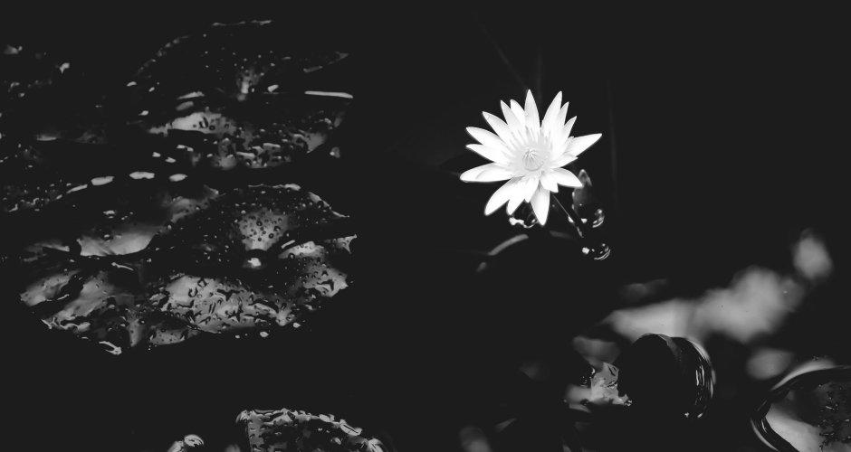 #Idea – Nature / 17.11.20