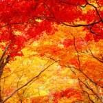 11月です 秋本番になって来ました