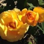 """<span class=""""title"""">5月は花がたくさん咲いています</span>"""