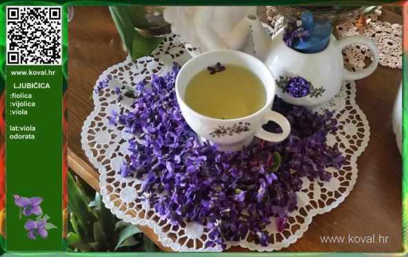 Rezultat slika za ljubicica čaj