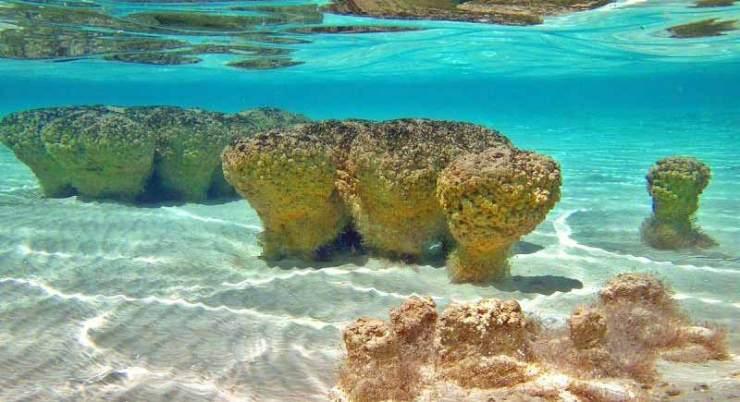 Stromatolites_underwater_md