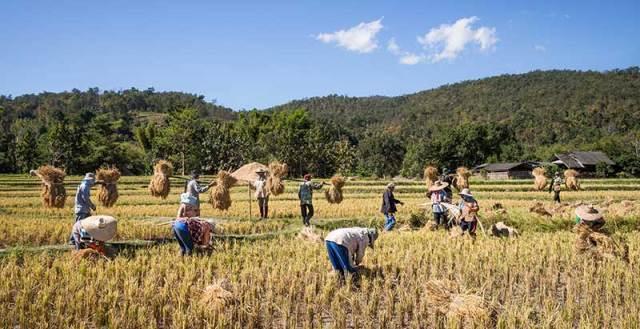 Makineleşmemiş tarım, çok fazla insan gücüne ihtiyaç duyar. Bu da, ailelerin kalabalık olması zorunluluğunu doğurur.