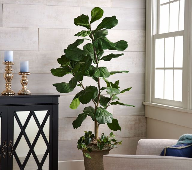 5-Faux Fiddle Leaf Tree in Starter Pot by Valerie