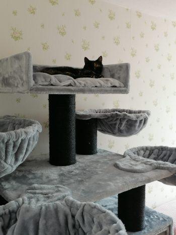 Krabpaal Cat Paradise Blackline Plus Light Grey Willem R