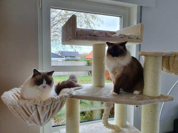 Lucie en Billie van Eddy-