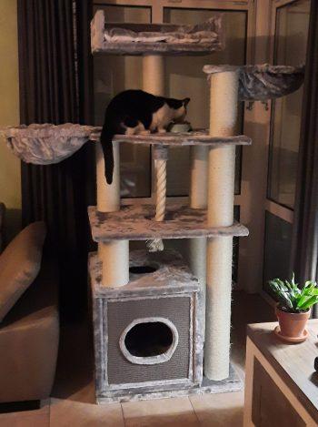 cat-relax-light-grey-marij-litjens