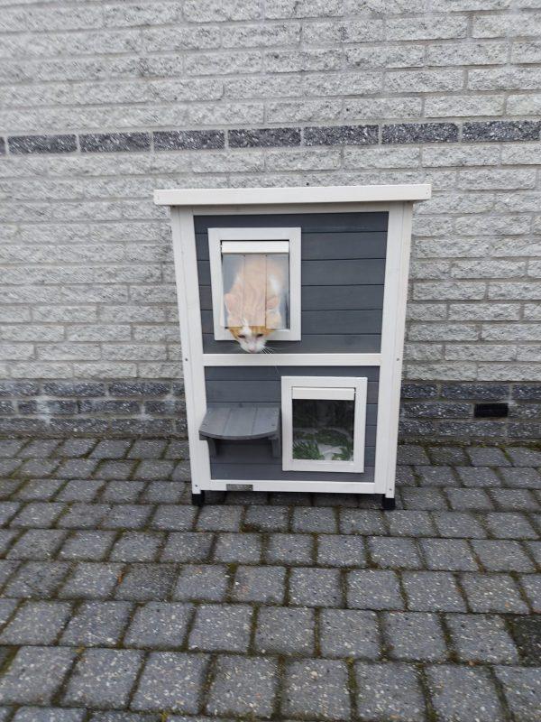Kattenhuis-Flat-family-Henk