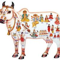 Open Letter to Gau Rakshaks and their apologists