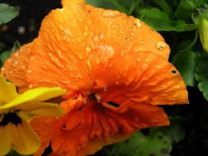 www.kraftfuttermischwerk.de/blog/flowerdrops2.jpg