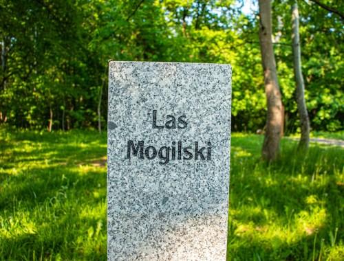 Lasek Mogilski
