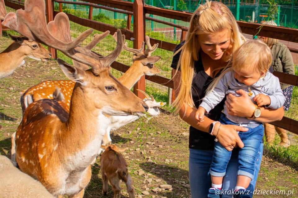 sarny, mini zoo