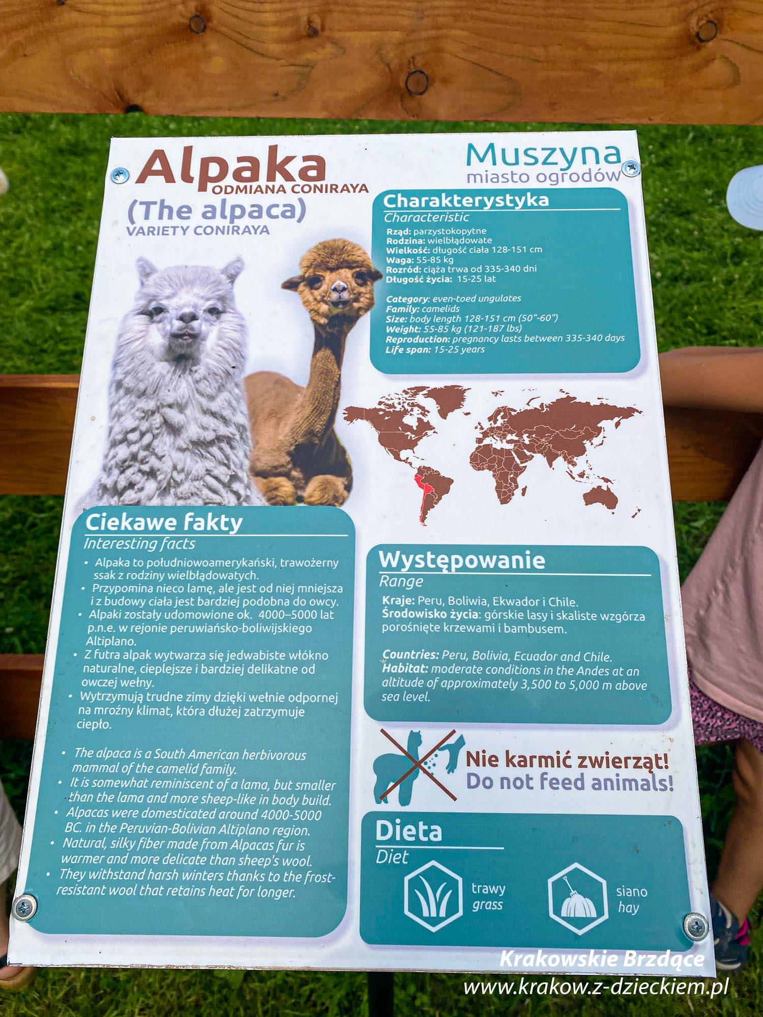 alpaki i park zapopradzie