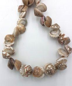 Kleine hele schelp kraaltjes bruin wit 10mm (per 10st)