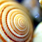 shell_0005