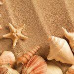 shell_0006