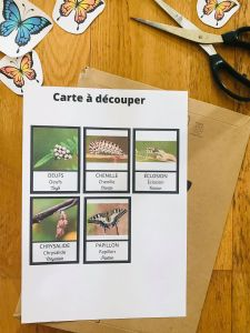 Cycle du papillon avec cartes de nomenclature