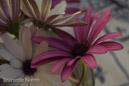 Inspirerande blommor