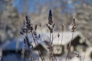 Vinterhus_800