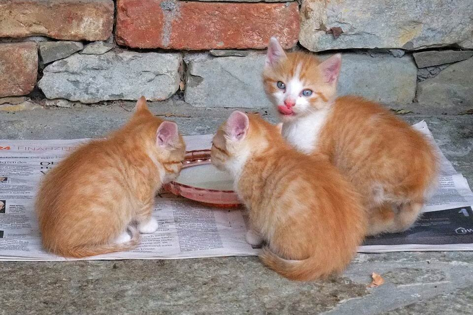 Czy kot może pić mleko bez laktozy?