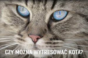 Czy-mozna-wytresowac-kota
