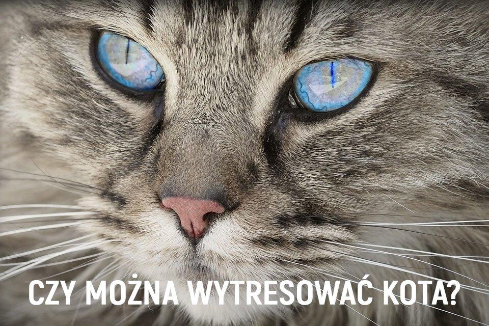 Czy można wytresować kota tak jak psa?