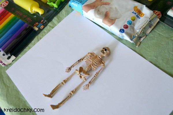 Проект з анатомії людини. Частина 2: внутрішні органи, м ...