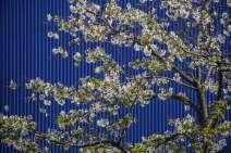 Abstract - Nature versus Urban Evironment