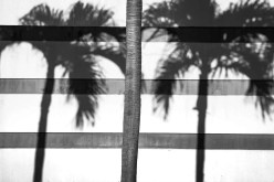 Abstract - Palm Trees 01