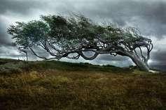 Argentina - Tierra del Fuego - Tree 01