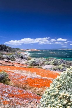 Australia - Tasmania - Flinders Island - Red Coast Linde