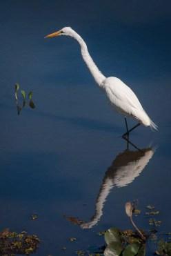 Brazil - Animal - Bird 06