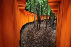 Japan - Kyoto - Kyoto - Rote Torii