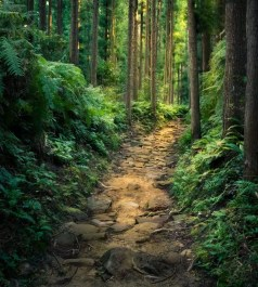 Japan - Wakayama - Kumano - Pilgerweg 03